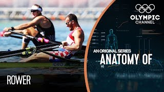 Anatomy of a Rower: Do they have the strongest legs of any Olympic athlete?