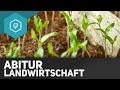 landwirtschaft-zusammenfassung-abitur/