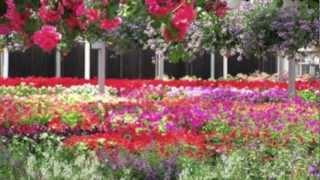 Colour of my Love(Siti Nurhaliza)