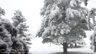 04-28-2017 Aurora, Colorado Heavy Snow Bends Branches - Thundersnow