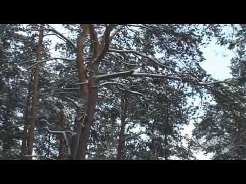The Magic of  the Nature – Winter.avi