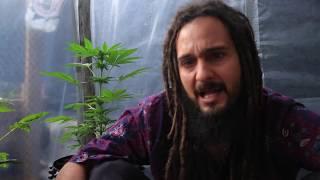 Ras Mateus  - Fruto Bendito OFFICIAL VIDEO