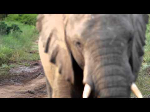 Reversing from an Elephant