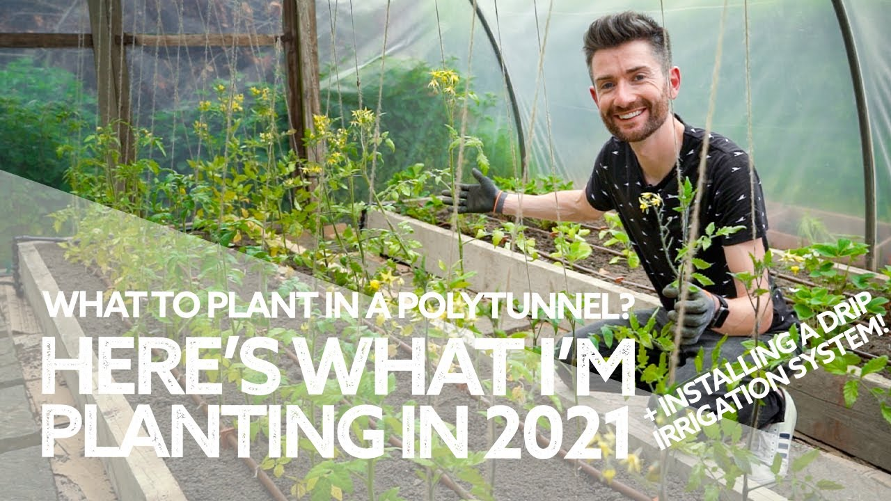 Planting the Polytunnel for Productivity & Abundance!… and Installing a Drip Irrigation System
