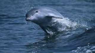 Praias Do Rio Azul -- Cantares do Sado