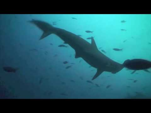 Diving and Tour to the GALAPAGOS ISLANDS 2010 Ecuador (first part)