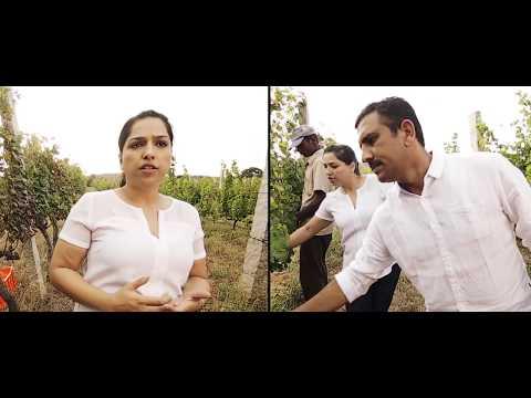 Grover Zampa Vineyards Corporate AV