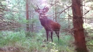Nezapomenutelný zážitek v lese! / An unforgettable experience in the woods!