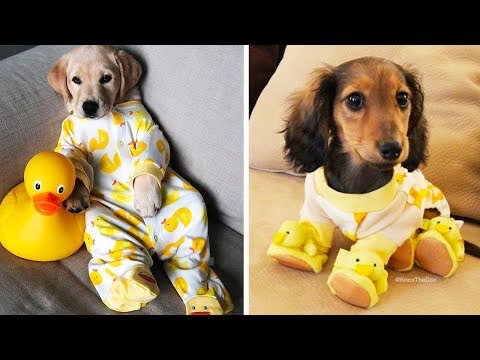 ♥Cute Puppies Doing Funny Things 2019♥ #25  Cutest Dogs | Cutest Puppies City