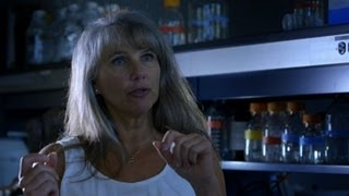 Dr Mary Schweitzer discovers T-rex blood cells - Horizon: Dinosaurs: The Hunt for Life - BBC Two