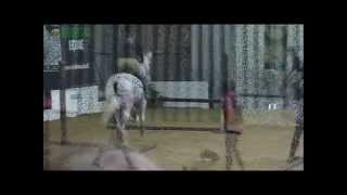 Thoroughbred Rehabiliation Center @ Your Horse live 2012.wmv
