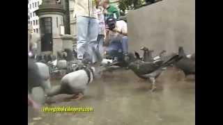 FRIENDLY PIGEONS, TRAFALGAR SQUARE, LONDON, ENGLAND
