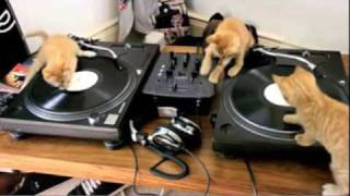 DJ Kittens Scratching away on Decks