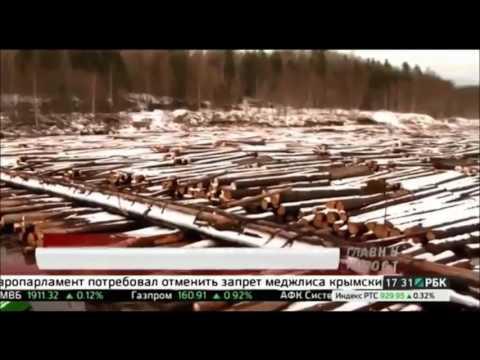 В Минлесхозе РБ обсуждены вопросы проведения лесовосстановительных мероприятий арендаторами лесных участков