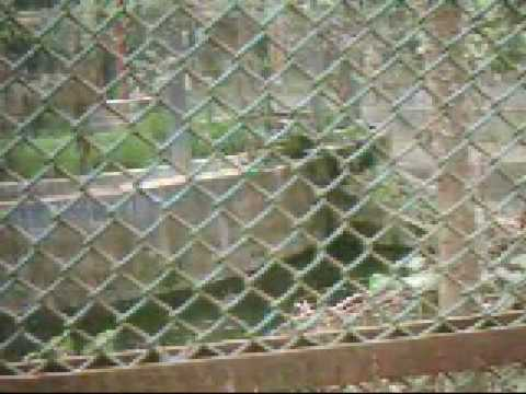 Our National Zoo_Ep 04