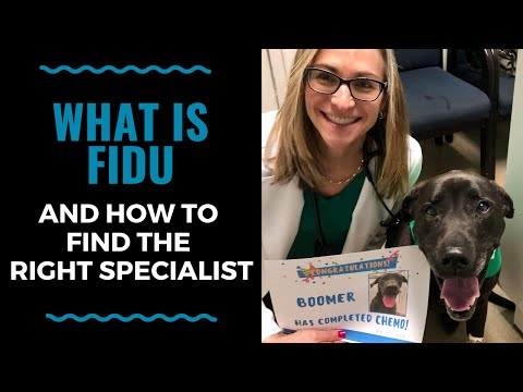 What is Fidu and How to find the Right Specialist  - VLOG 119
