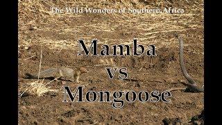 Mamba vs Mongoose width=