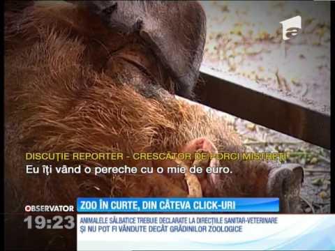 Animalele sălbatice se vând pe internet