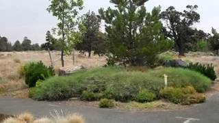 Homes for Sale - 560 SW Tamarack Court Redmond OR 97756 - Brae Runnels