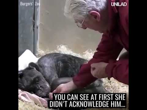 This 59-year-old chimpanzee was refusing food and ready to die until...