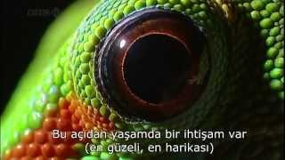 Bilim Senfonisi - Evrim