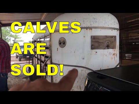 CALF SALE RESULTS~SURPRISING!