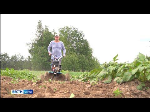 Учёные Коми рассказали, как окучивать картофель для хорошего урожая