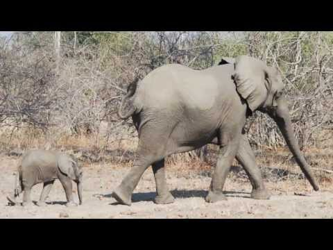Australia0811 Travels – Journey Through Africa – Meet the African Elephants