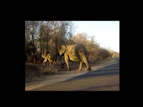 Elephants Crossing the Road