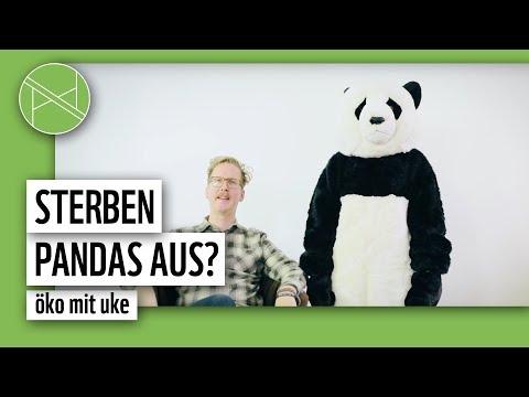 Panda adoptieren   Öko mit Uke #30