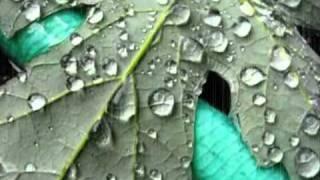 January Rain - David Gray.wmv