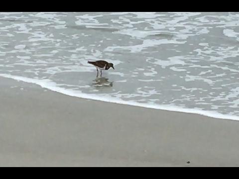 Speedy Sandpipers