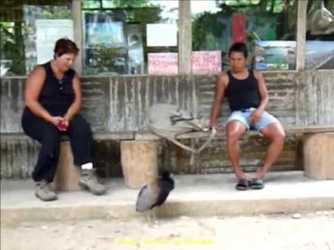 2012 Ecuador   Puerto Misahualli, AmaZOOnico, Centro de Rescate de Animales, Rio Napo