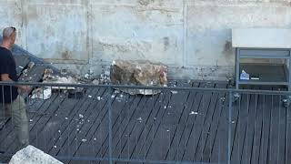 Ancient Boulder Dislodges From Jerusalem Western Wall; Crashes Onto Egalitarian Plaza
