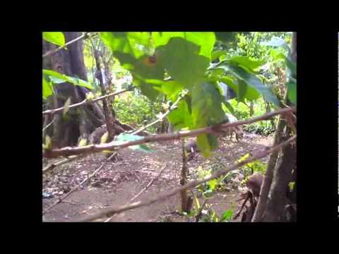 Nicaragua Trip 2011 – 27