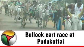 Bullock cart race at Pudukottai