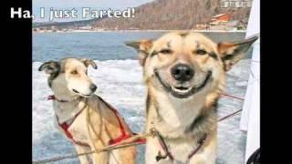Something to make you laugh