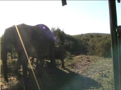 South Africa Trip – Little Elephants greet – Addo Elephant Park