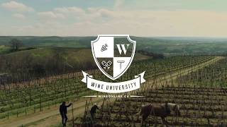 Wine University I: What Is Terroir?