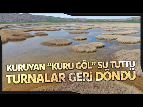 """Kuruyan """"Kuru Göl"""" Su Tuttu, Giden Turnalar Geri Döndü"""
