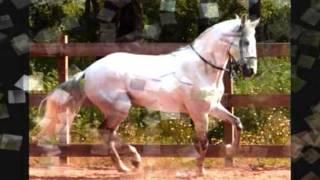 Nuno da Câmara Pereira - Cavalo Ruço