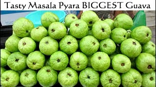 Tasty Masala Pyara ( BIGGEST Guava ) & Cucumber - Indian Street Food - Street Food India width=