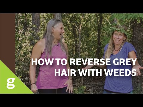 Reversing Gray Hair with Weeds