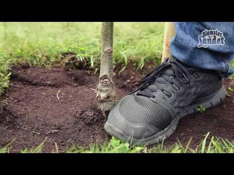 Fruktträd - plantera så här!