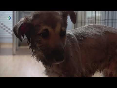 В посёлке Нижний Одес живодёры облили клеем щенка и оставили в лесу в коробке.