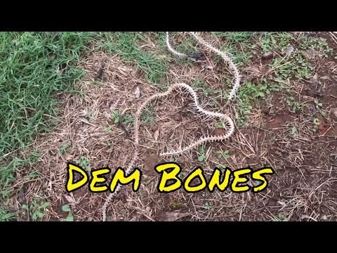 Dem Bones, Dem Bones, Dem SNAKE Bones