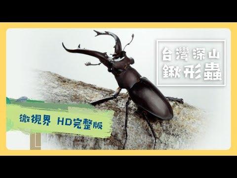 台灣深山鍬形蟲 -公視《台灣特有種》微視界HD版 Episode#3