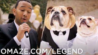 "John Legend ""All of Me"" Dog Wedding Music Video // Omaze"