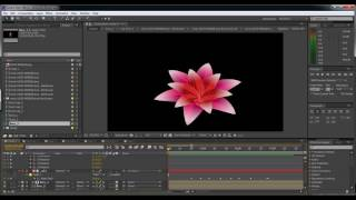 Lotus blooming animation #Test #after effects