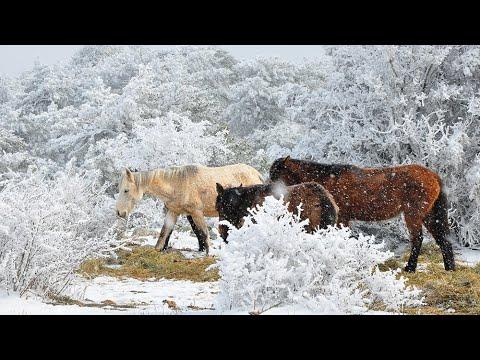 Spil Dağı'nda seyrine doyumsuz kar manzaraları